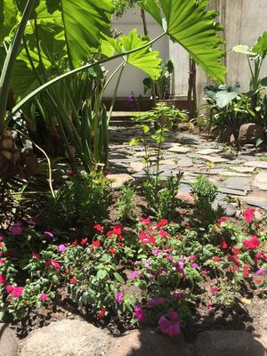 Jardinería Paisajismo Diseño Mantenimiento Y Podas En Altura