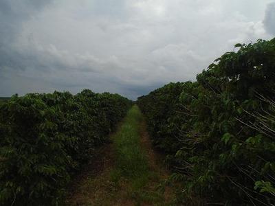 Fazenda De Café, 50 Alqueires Na Região De São S. Paraíso, Máquinas E Equipamentos, Área Mecanizada - Fa0015