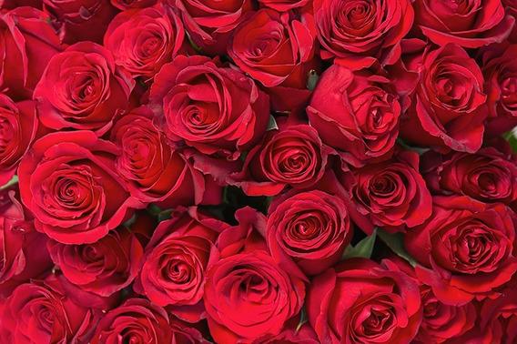 Fundo Fotográfico Tecido Sublimado Rosas Vermelhas 3,0x2,0m