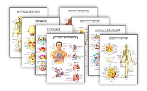 Kit 8 Resumos Anatomia Humana Fisiologia - Plastificado