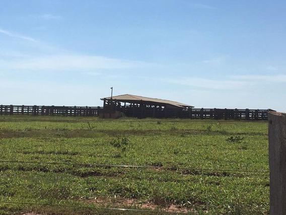 Fazenda Para Venda Em Nova Andradina, Centro - 1101