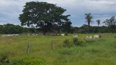 Fazenda A Venda Em Duere - To (dupla Aptidão) - 1049