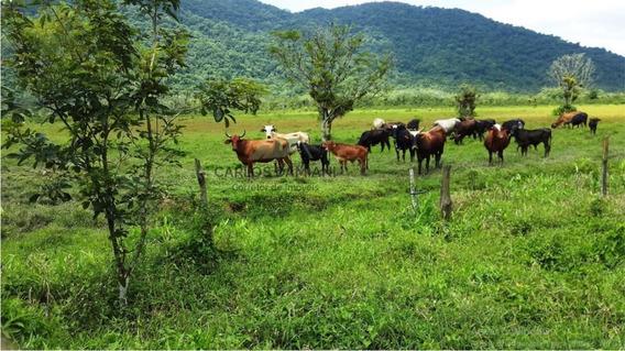 Fazenda A Venda No Bairro Jardim Mambú Em Itanhaém - Sp. - 103-1