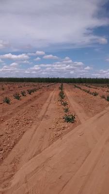 Extraordinária Fazenda Com Eucalipto De 12.834,84 Ha - 867