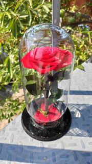 Rosas Eternas Varios Colores A Elegir