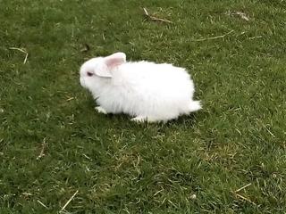 Conejos Para Mascotas