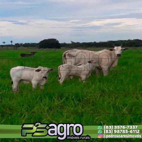 Fazenda À Venda, 35.000 Hectares Por R$ 350.000.000 - Centro - Alto Araguaia/mt - Fa0061