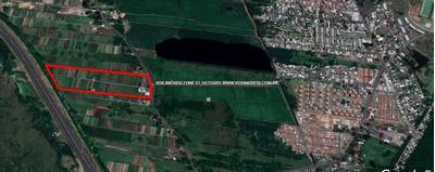 Terreno - Mato Grande - Ref: 49999 - V-49999
