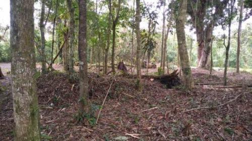 Terreno De Chácara No Jardim Coronel, Em Itanhaém - 7016