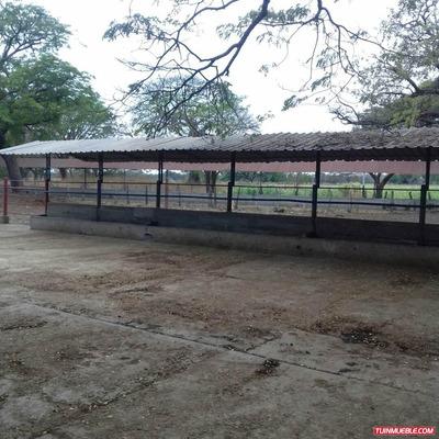 Haciendas - Fincas En Venta En Piritud, Protuguesa