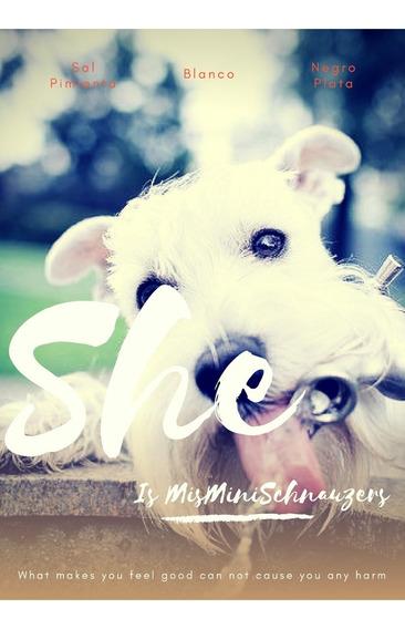 Cachorro Schnauzer Mini Hembra Sal Pimienta Misminischnauzer