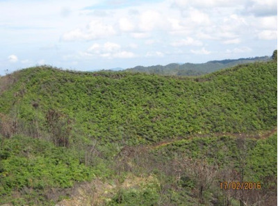 Finca Para Cultivo En San Vicente Barata