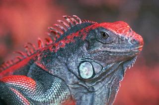 Adesivo De Parede Animais Selvagens Silvestres Cobras E Etc