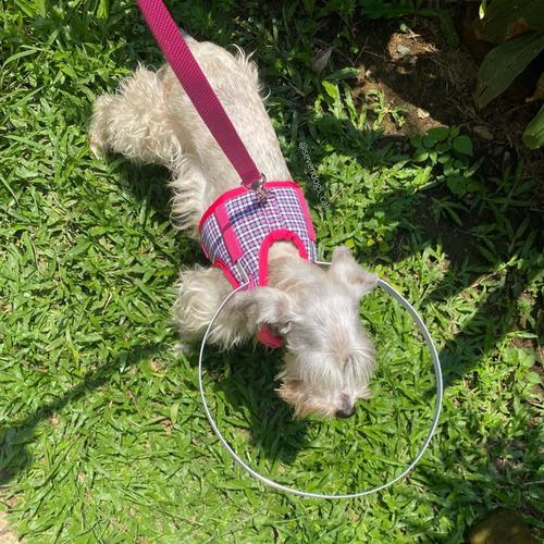 Arnés / Collar / Pechera Para Perros Ciegos - Talla S