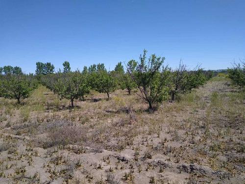 Finca Campo En Mendoza General Alvear