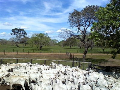 Fazenda Em Pium - To P/ Pecuária - 417