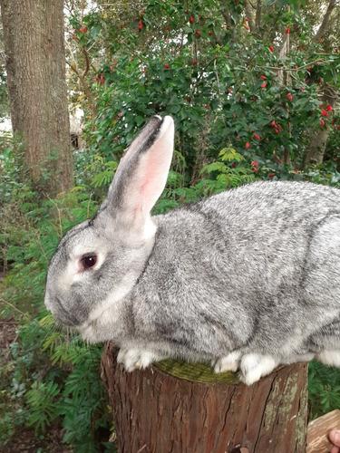 Imagen 1 de 4 de Conejos Faenados
