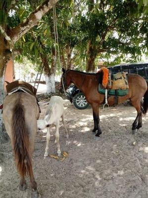 Fazenda Para Venda Em Boa Vista Do Gurupi, Centro - 526495
