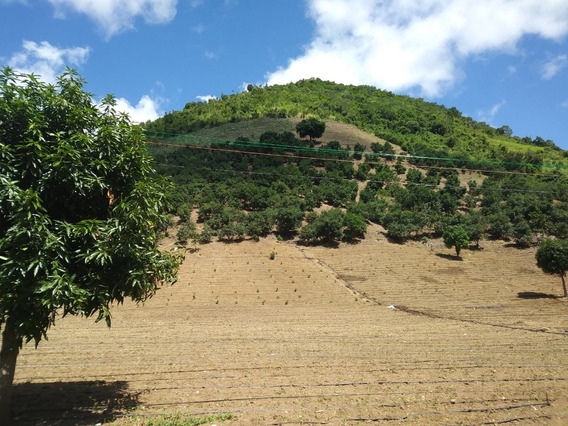 Excelente Finca De Aguacate En Rancho Arriba