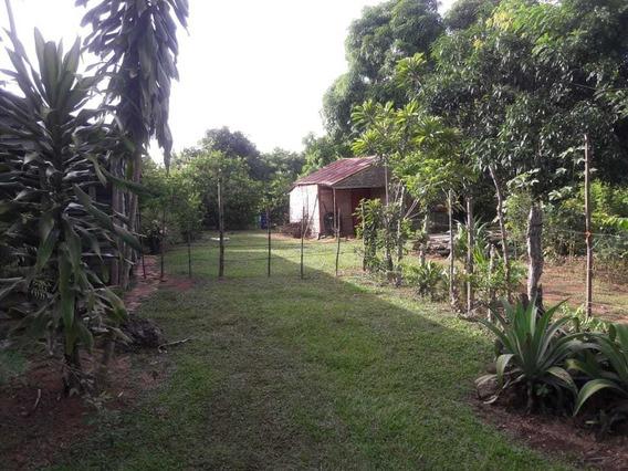 Finca De 40 Tareas Agrícola Sembrada De Limón En Bayaguana