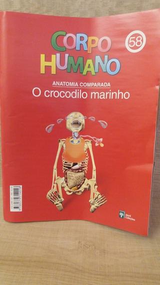 Fascículo Corpo Humano Abril Cultural Edição 58