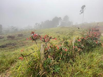 31c* Lote Com Vista Para A Natureza!