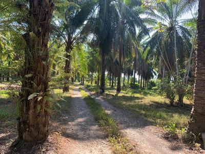 Beautiful Property In Parrita Costa Rica