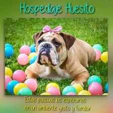 Hospedaje Y Guardería Canina Semana Santa