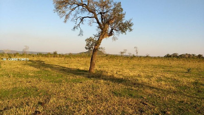 Área Rural Para Venda Em Bataiporã - Pa48