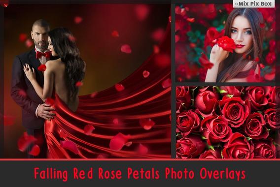 Sobreposições De Fotos De Pétalas De Rosa Caindo