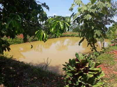 Se Vende Finca Frutera En Mariquita Tolima