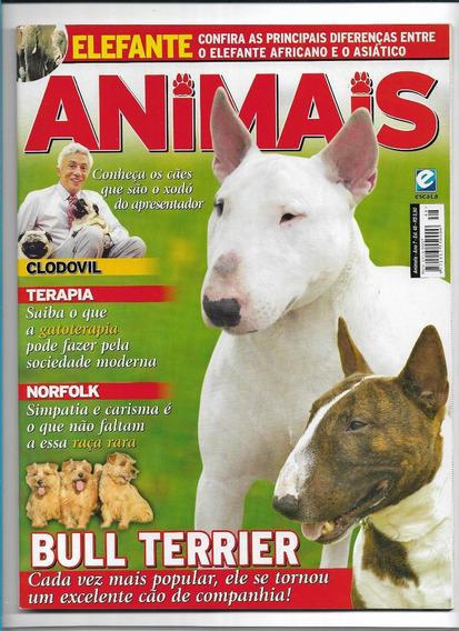 Animais E Cia Revista Ed 48 Bull Terrier Cães Norfolk