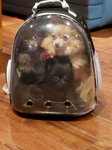 Mochila Transportadora Perros, Gatos, Mascotas