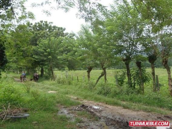 Terrenos En Venta En San Felipe, Yaracuy Rah Co