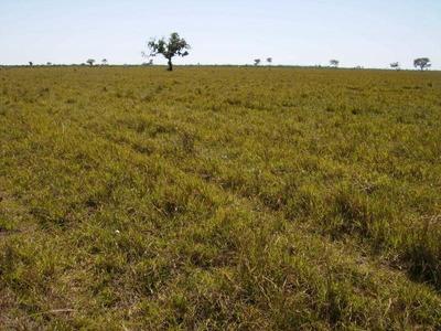 Fazenda Para Venda Em Cocalinho, Área Zona Rural Cocalinho/mt R$ 600.000.000 - 36795