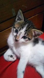 Gatos Adopción