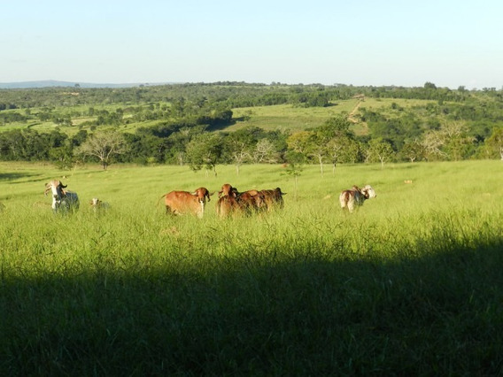 Fazenda Martinho Campos - 3006