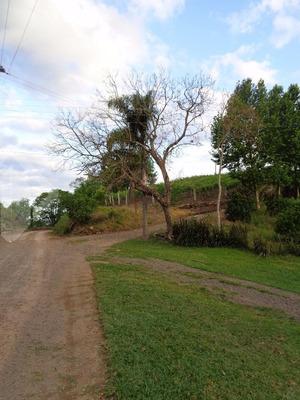 Terreno - Centro - Ref: 241305 - V-241305