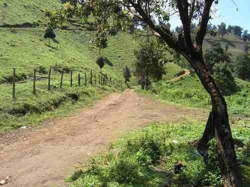 Venta Terreno Para Huerta De Aguacate En Morelia Mich. 83has
