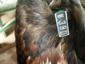 Anilha Numerica Para Aves