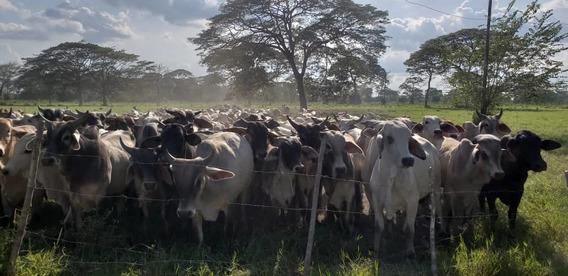 Fincas En Venta En Venezuela - Guanare