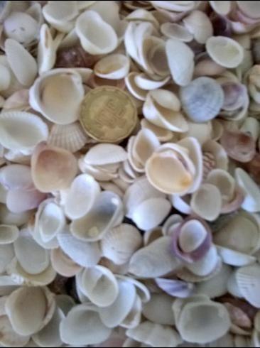 Conchas De Mar,invitaciones Boda.mix Conchas Mar