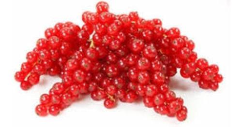 Frete Grátis Groselha Vermelha Sementes De Frutas  P/ Mudas