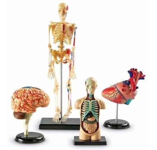 Anatomía Cuerpo Humano Corazón Cerebro Esqueleto 132 Piezas