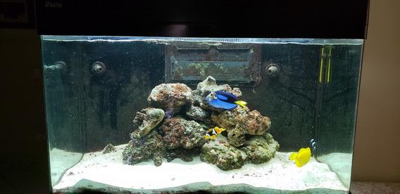 Aquario Marinho Red Sea Max 250