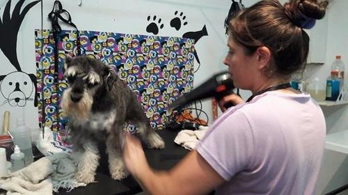 Imagen 1 de 6 de Curso Peluqueria Canina Zona Sur Lanus Lomas Avellaneda