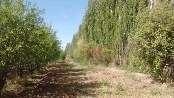 Vendo Quinta En San Rafael Mendoza
