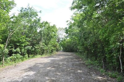Grande Lote De 4 Hectares Con Bosque En Cozumel