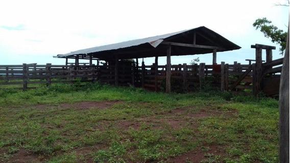 Fazenda Para Venda Em Paranatinga, Zona Rural - 1082