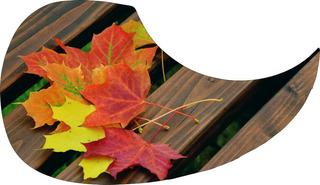 Escudo Palheteira Resinada Violão Aço Maple Leaf